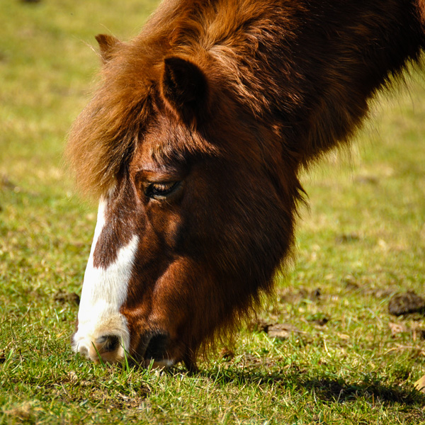 Bijou, le poney coquet