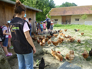 animation pédagogique dans l'enclos des poules