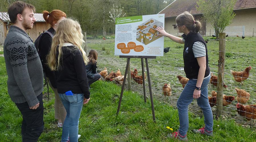 La Hardonnerie, éducation, pédagogie, poules, visite, parcours, ferme, refuge