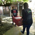 sauvetage des palmipèdes