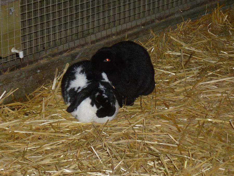 Deux nouveaux lapins à La Hardonnerie
