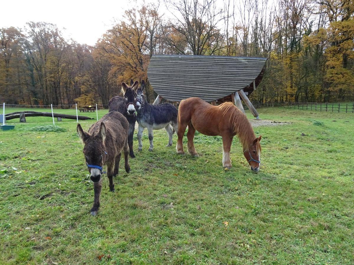 La Hardonnerie accueille ses premiers ânes !
