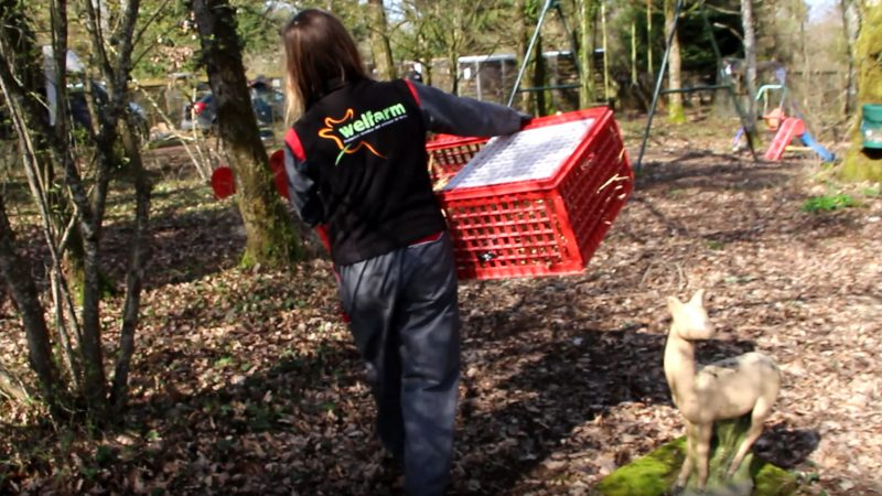 Sauvetage parc animalier la Hardonnerie