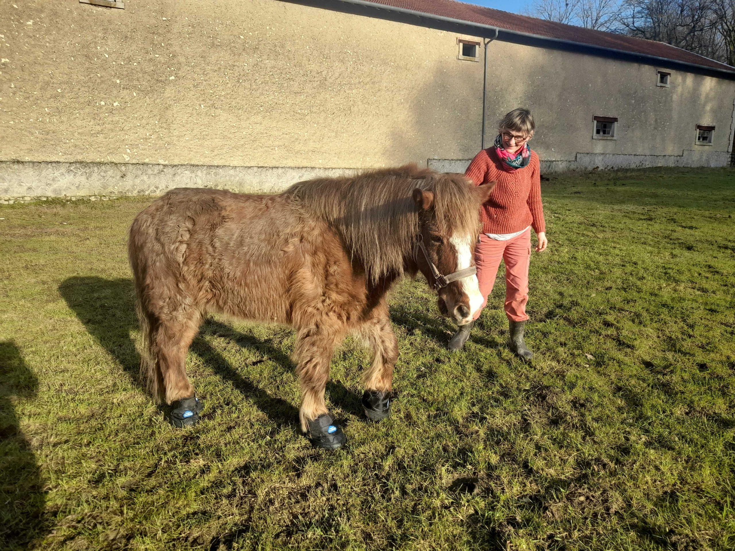 Le poney Bijou a reçu de nouveaux chaussons